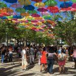 Umbrellas   Coral Gables, FL   Miami City Tours   Miami Native Tours
