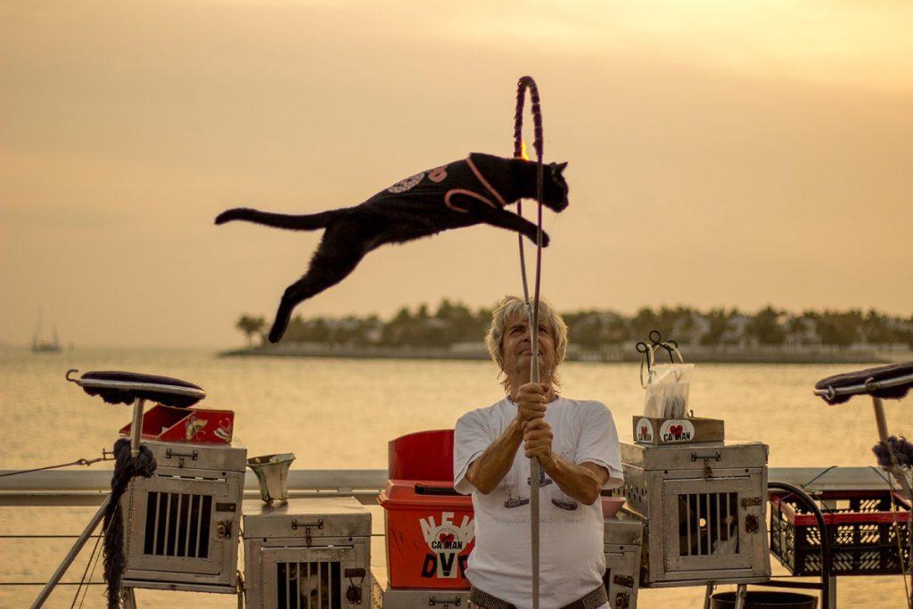 Miami To Key West Tours | Sunset Mallory Square Cat Man | Miami Native Tours