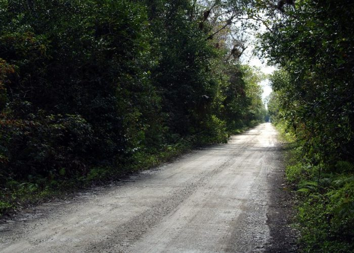 Unpaved Section Loop Road | Private Everglades & Big Cypress Tours | Miami Native Tours
