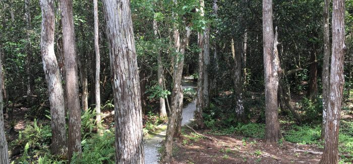 Clyde Butcher Gallery Trail | Private Everglades & Big Cypress Tours | Miami & Miami Beach | Miami Native Tours